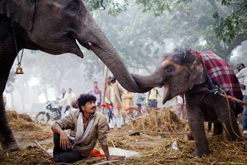 Mahout con un elefante de tres meses